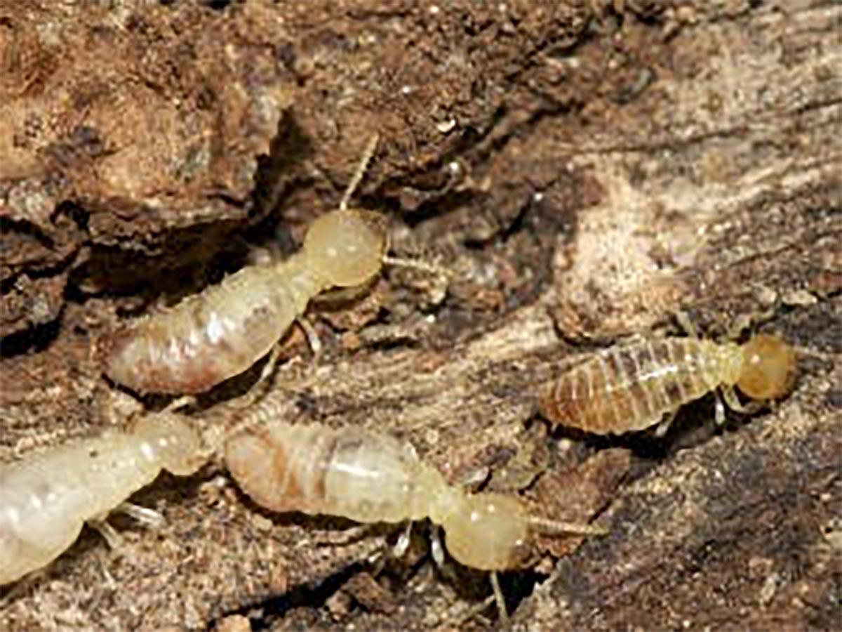 Termites page header